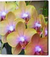 Orchid 7 Canvas Print