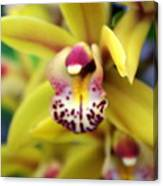Orchid 9 Canvas Print
