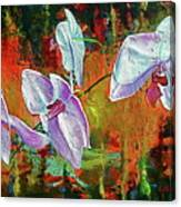 Orchid A Canvas Print