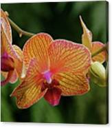 Orchid Aliveness Canvas Print