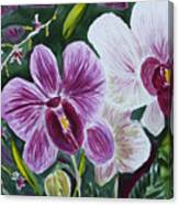 Orchid At Aos 2010 Canvas Print