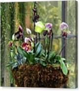 Orchid Basket Canvas Print