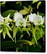 Orchid Choir Canvas Print
