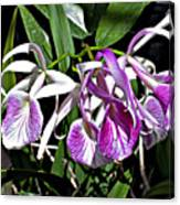 Orchid Cluster Canvas Print