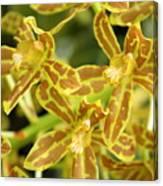 Orchid Drama Canvas Canvas Print