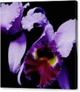 Orchid Elegance Canvas Print