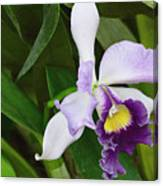Orchid Expression 3892 Canvas Print