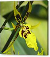 Orchid Expression 4237 Canvas Print