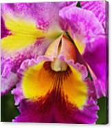Orchid Expression 9550 Canvas Print