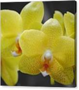 Orchid Family Canvas Print