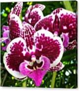 Orchid Hanging In Palms Canvas Print