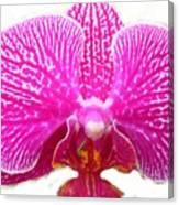 Orchid I Pretty Canvas Print