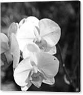 Orchid In Black And White Canvas Print