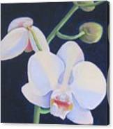 Orchid In Blue Canvas Print
