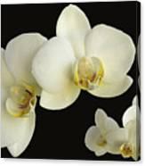 Orchid Montage Canvas Print
