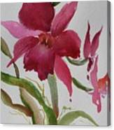 Orchid Morning Canvas Print