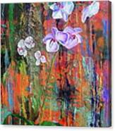 Orchid O Canvas Print