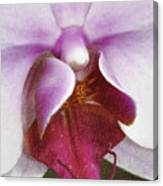Orchid Portrait In Craquelure Canvas Print