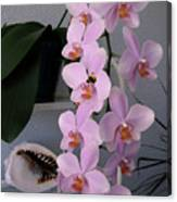 Orchid Splendor Canvas Print