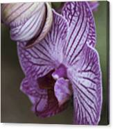 Orchid Strips Canvas Print