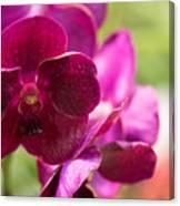 Orchid Vanda Ratchaburi Waxy Red Canvas Print