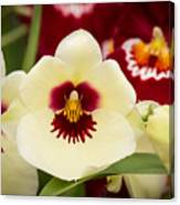 Orchid Vii Canvas Print