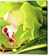 Orchid With Yellow And Green 2 Canvas Print