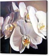 Orchidee Canvas Print
