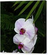 Orchids #1 Canvas Print