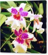 Orchids 1 Canvas Print