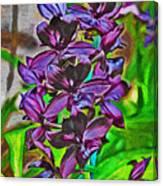 Orchids 1714 Canvas Print