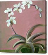 Orchids 2 Canvas Print