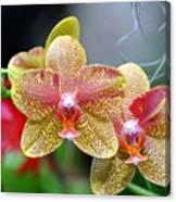 Orchids 35 Canvas Print