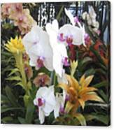 Orchids And Iron Canvas Print