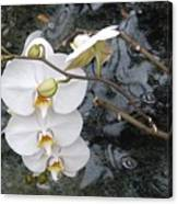 Orchids And Water Canvas Print