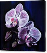 Orchids II Canvas Print