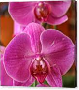 Orchids In Bloom Canvas Print