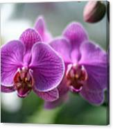 Orchids In Flight Canvas Print