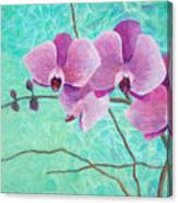 Orchids In Pink Canvas Print