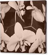Orchids In Sepia Canvas Print