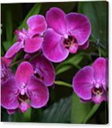 Orchids In Vivid Pink  Canvas Print