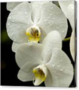 Orchids Kauai Canvas Print