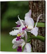 Orchids On A Tree Canvas Print