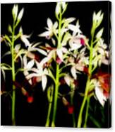 Orchids On Black Canvas Print