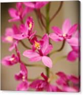 Orchids On Stem Canvas Print