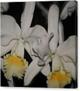 Orchids Satin Canvas Print