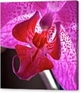 Orchid's Tongue Canvas Print