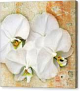 Orchids Upon The Rough Canvas Print