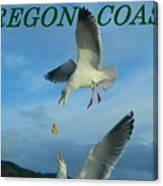 Oregon Coast Amazing Seagulls Canvas Print