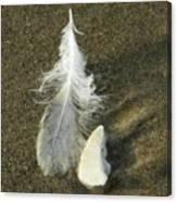 Oregon Feather Canvas Print
